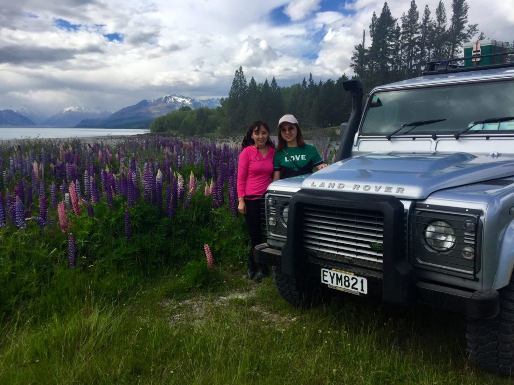 Best time to view lupins